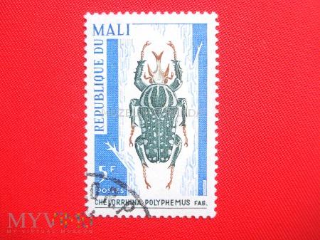 Duże zdjęcie Chelorrhina polyphemus