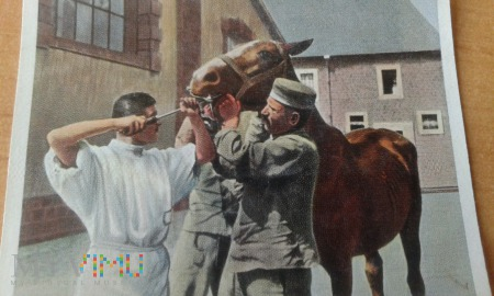 koń u weterynarza