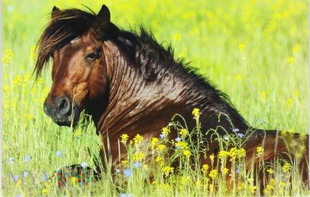 Duże zdjęcie Koń