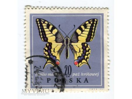 1967 paź królowej Papilio machaon Polska