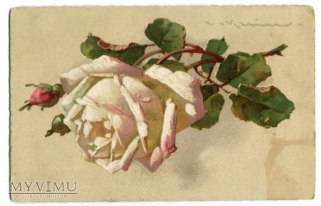 1913 Catharina C. Klein Róże kwiaty Żurawica