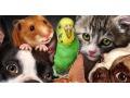 Zobacz kolekcję Zwierzęta