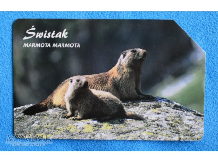 Duże zdjęcie Zwierzęta chronione w Polsce (Ssaki)