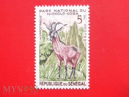 Park Narodowy Niokolo-Koba