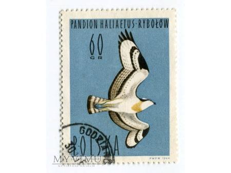 1964 rybołów Ptak znaczek Pandion haliaetus Polska