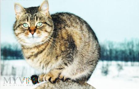 Duże zdjęcie Kot