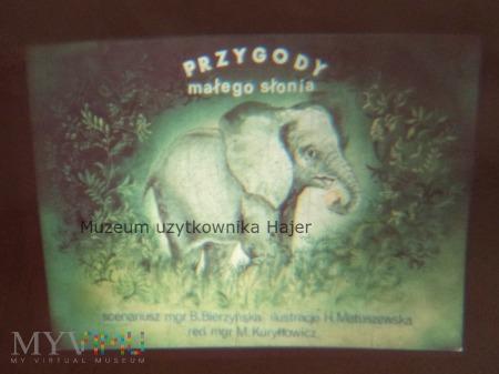 Zwierzęta egzotyczne - Przygody małego słonia