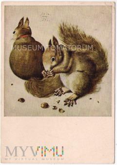 Wiewiórki - 1954