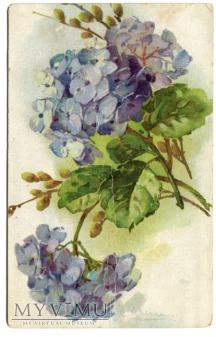 1925 Catharina C. Klein piękne kwiaty Flowers