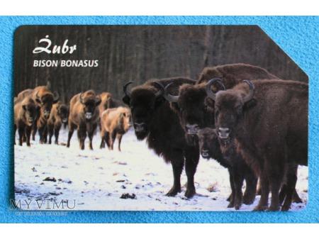Zwierzęta chronione w Polsce (Ssaki)