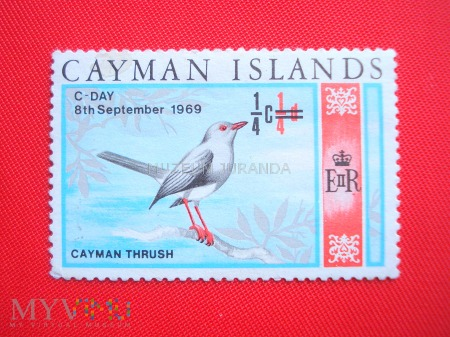 Duże zdjęcie Grand Cayman Thrush
