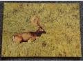 Zobacz kolekcję Zwierzęta  - kartka pocztowa