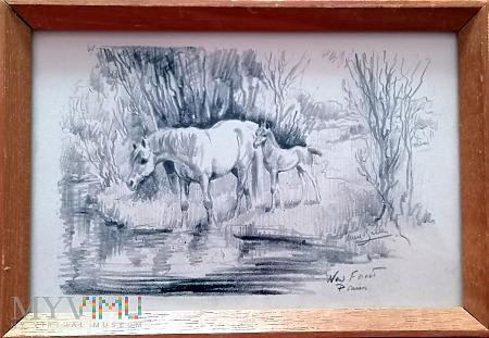 rysunek klaczy ze źrebięciem u wodopoju