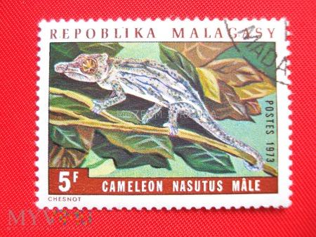 Duże zdjęcie Kameleon (2)