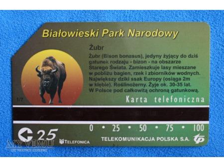 Białowieski Park Narodowy 1 (7)