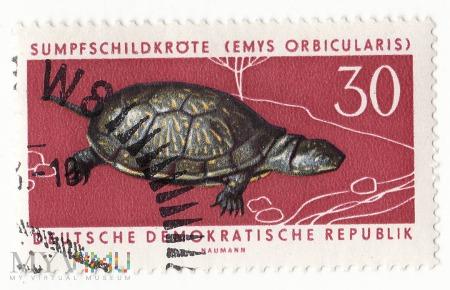 Znaczek pocztowy -Zwierzęta 25