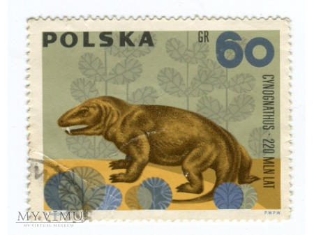 1966 Cynognathus Cynognat Polska