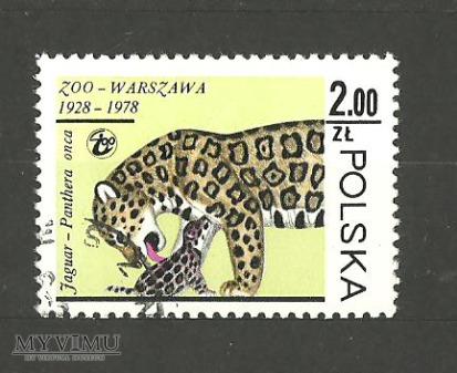 Duże zdjęcie Jaguar