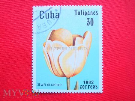 """Duże zdjęcie Tulipan """"jewel of Spring"""""""