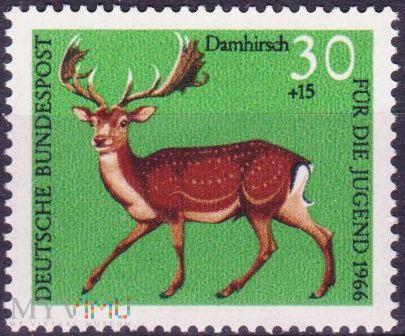 Damhirsch