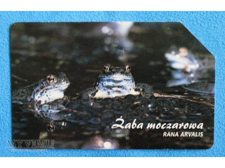 Zwierzęta chronione w Polsce (Płazy i Gady)
