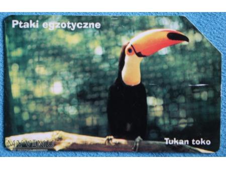 Ptaki Egzotyczne 1(10)