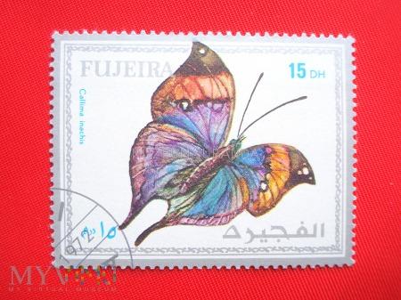 Motyl Callima inachis