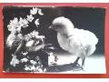 Kurczaczek wielkanocny WESOŁYCH ŚWIĄT Wielkanoc
