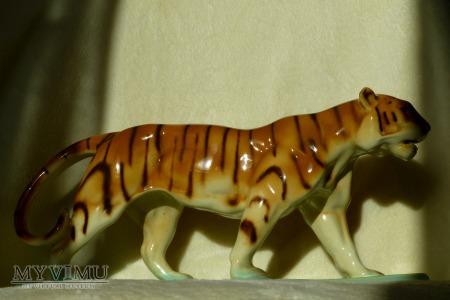 Tygrys- Ditmar Urbach