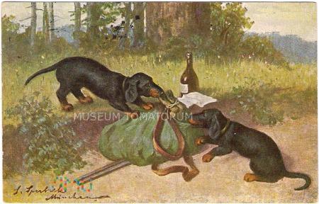 Dachshund - Jamnik myśliwy - 1913
