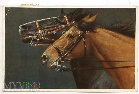 Koń - portret - obieg w 1935 r.