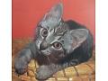 Zobacz kolekcję Kot - kartka pocztowa