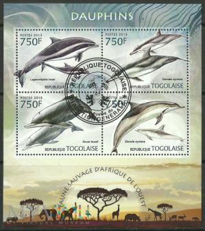 Dauphins/Togo