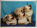 Koty - kartka pocztowa