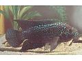 Zobacz kolekcję Ryby - kartka pocztowa