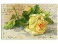 Catharina C. Klein żółte róże roses