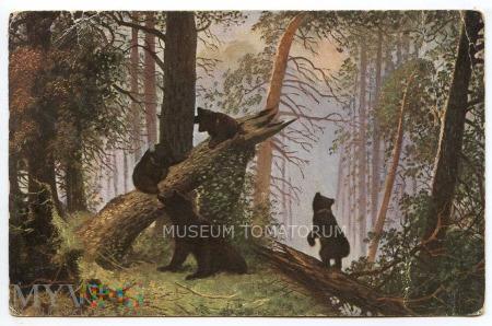 Szyszkin - Poranek w sosnowym lesie
