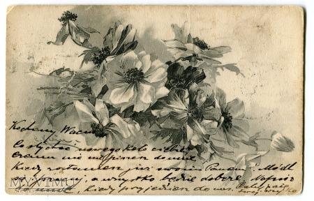 1903 Catharina C. Klein kwiaty Przemyśl Kraków