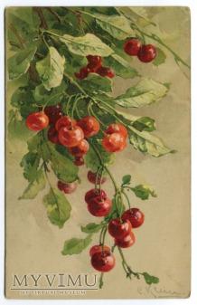 Catharina C. Klein owoce fruit frutti