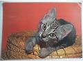 Kot - kartka pocztowa