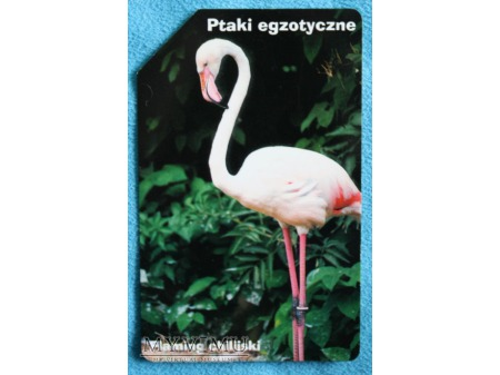Ptaki Egzotyczne 3(10)