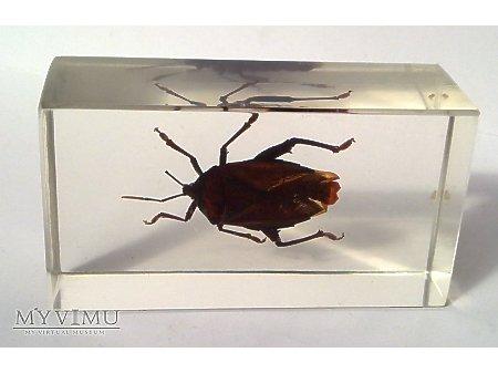 Owady i pajęczaki 12