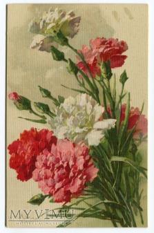 Catharina C. Klein kwiat flowers Studienserie