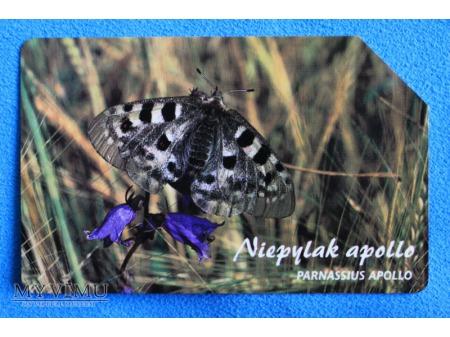 Zwierzęta chronione w Polsce (Owady)