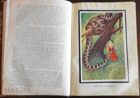 Życie zwierząt 1912-1914