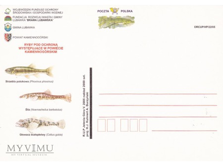 Ryby chronione powiatu kamiennogórskiego