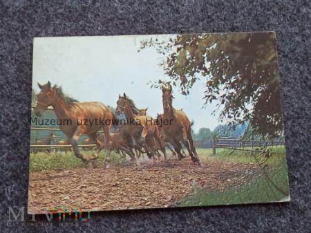 OCHABY - Stadnina koni Pruchna Konie angloarabskie
