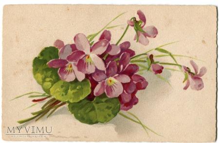 Catharina C. Klein kwiaty Flowers postcard