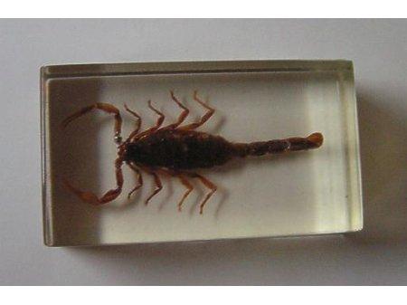 Owady i pajęczaki 1