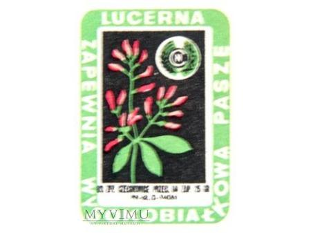 Duże zdjęcie LUCERNA II